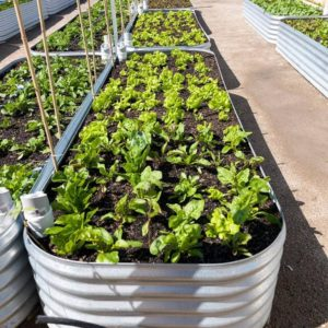 Corrugated water tank wicking bed